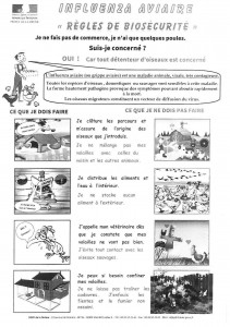 grippe aviaire-1